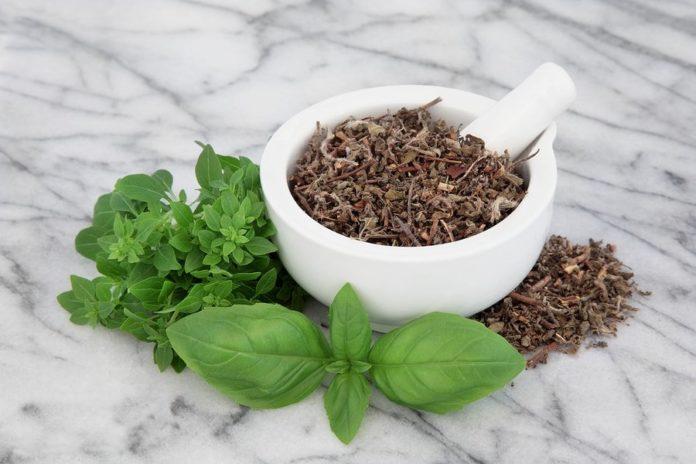 Fresh-basil-indianherb
