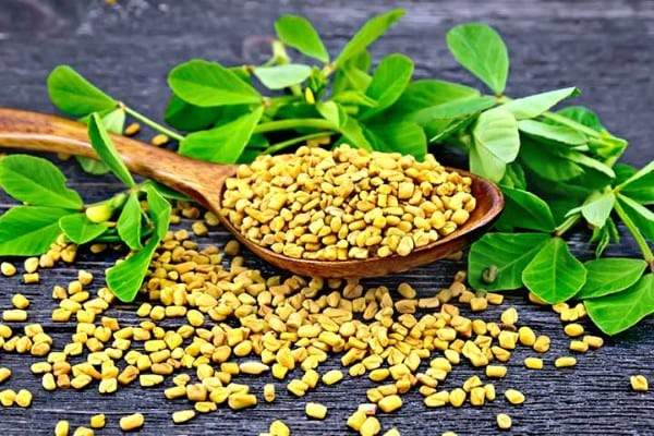 fenugreek-benefits